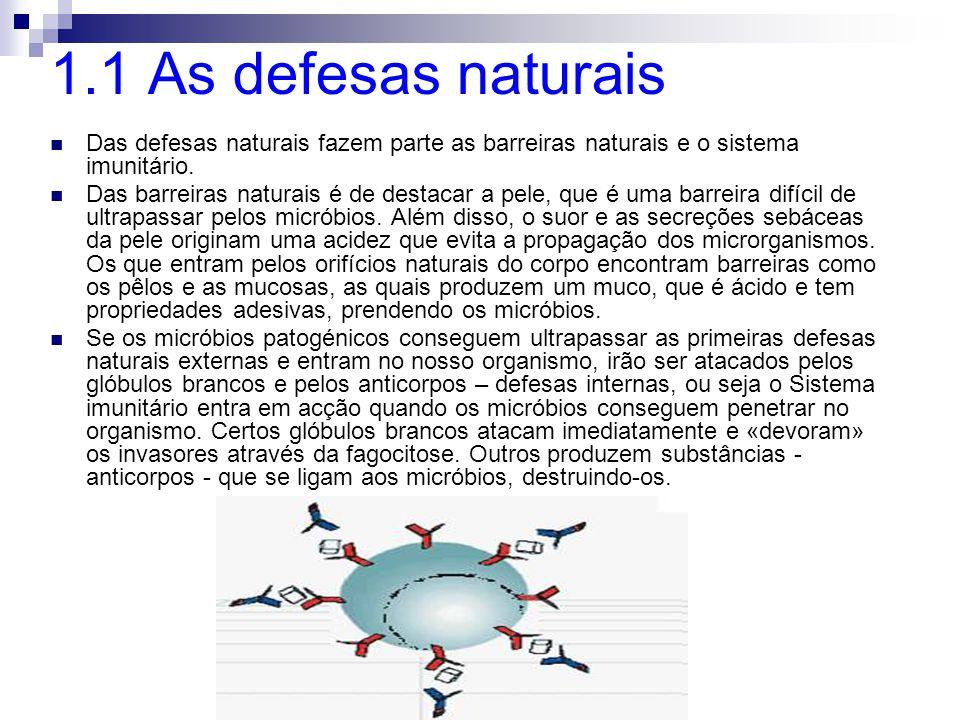 1.1 As defesas naturais Das defesas naturais fazem parte as barreiras naturais e o sistema imunitário. Das barreiras naturais é de destacar a pele, qu
