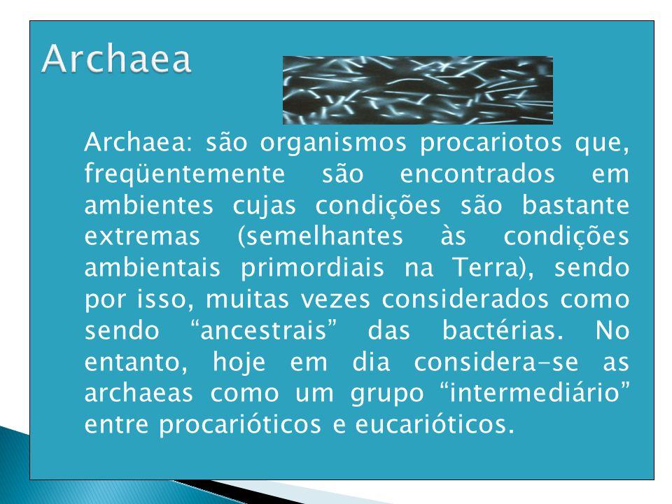  Archaea: são organismos procariotos que, freqüentemente são encontrados em ambientes cujas condições são bastante extremas (semelhantes às condições ambientais primordiais na Terra), sendo por isso, muitas vezes considerados como sendo ancestrais das bactérias.