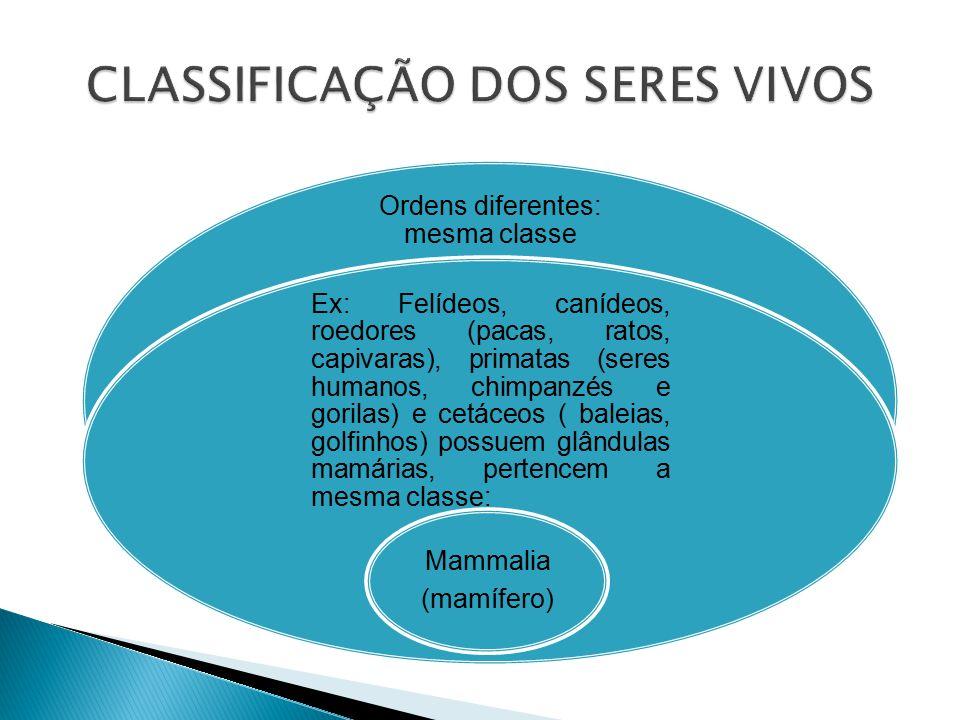 Ordens diferentes: mesma classe Ex: Felídeos, canídeos, roedores (pacas, ratos, capivaras), primatas (seres humanos, chimpanzés e gorilas) e cetáceos ( baleias, golfinhos) possuem glândulas mamárias, pertencem a mesma classe: Mammalia (mamífero)