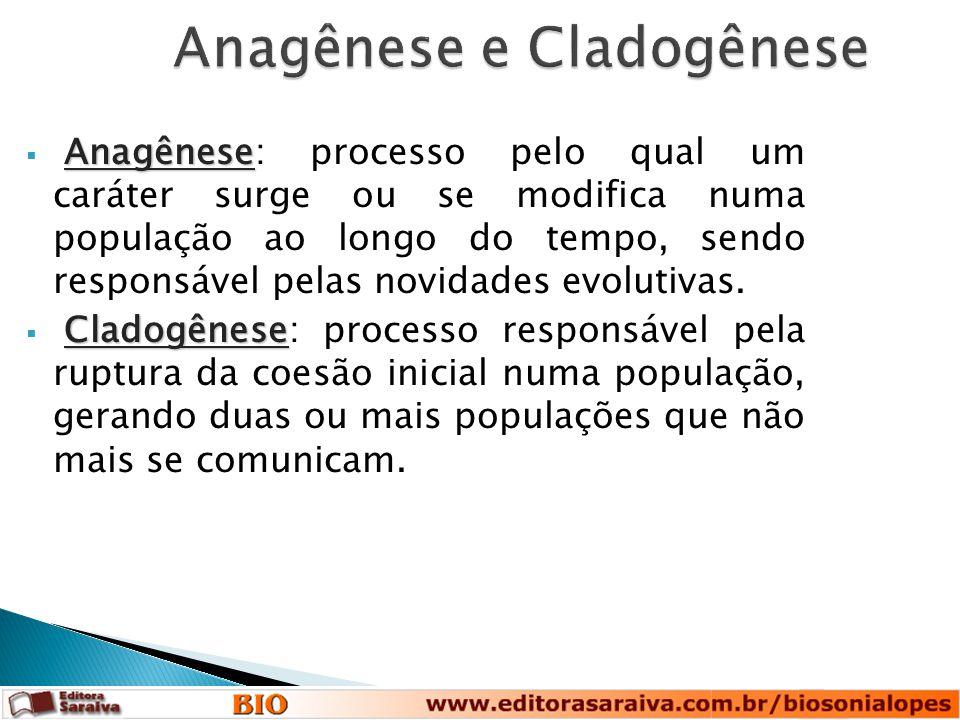 Anagênese e Cladogênese Anagênese  Anagênese: processo pelo qual um caráter surge ou se modifica numa população ao longo do tempo, sendo responsável pelas novidades evolutivas.