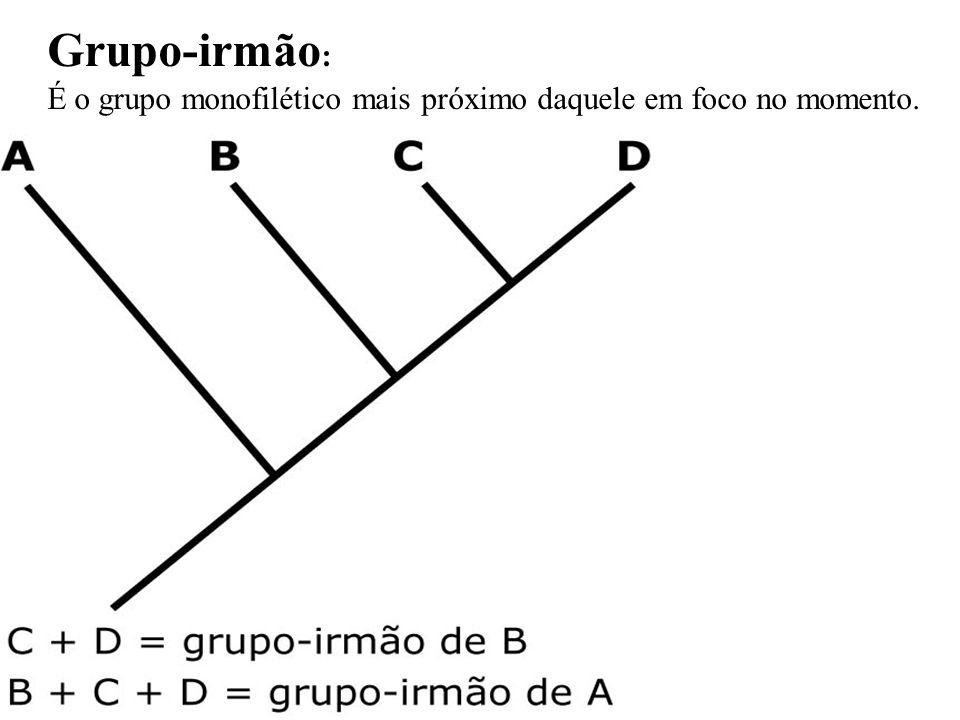 Grupo-irmão : É o grupo monofilético mais próximo daquele em foco no momento.