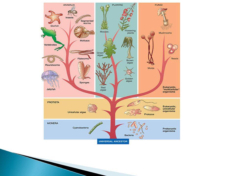 Em Biologia, o esquema conhecido como árvore filogenética, também chamado de cladograma ou árvore da vida , permite: I.