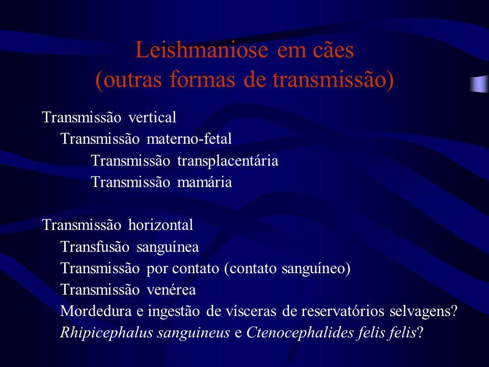 Leishmaniose em cães (outras formas de transmissão) Transmissão vertical Transmissão materno-fetal Transmissão transplacentária Transmissão mamária Tr