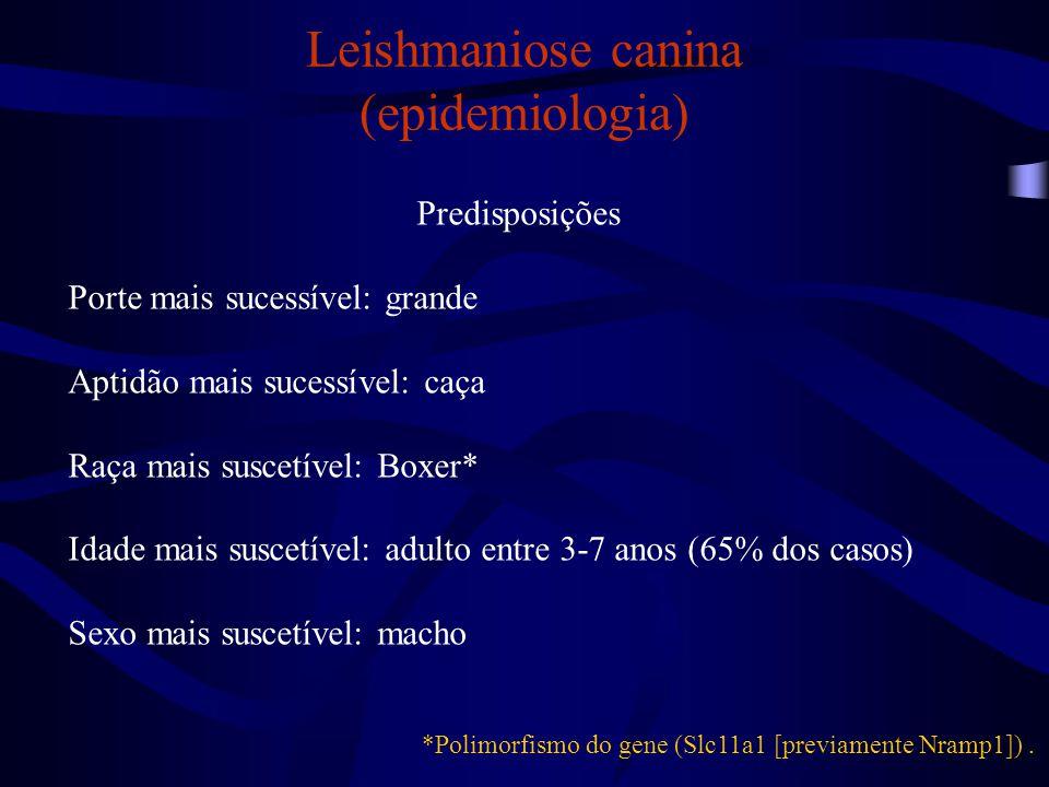 Leishmaniose canina (epidemiologia) Predisposições Porte mais sucessível: grande Aptidão mais sucessível: caça Raça mais suscetível: Boxer* Idade mais
