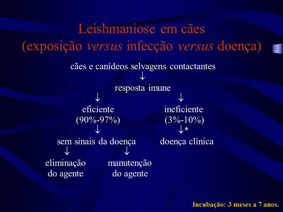 Leishmaniose em cães (exposição versus infecção versus doença) cães e canídeos selvagens contactantes  resposta imune  eficiente ineficiente (90%-97