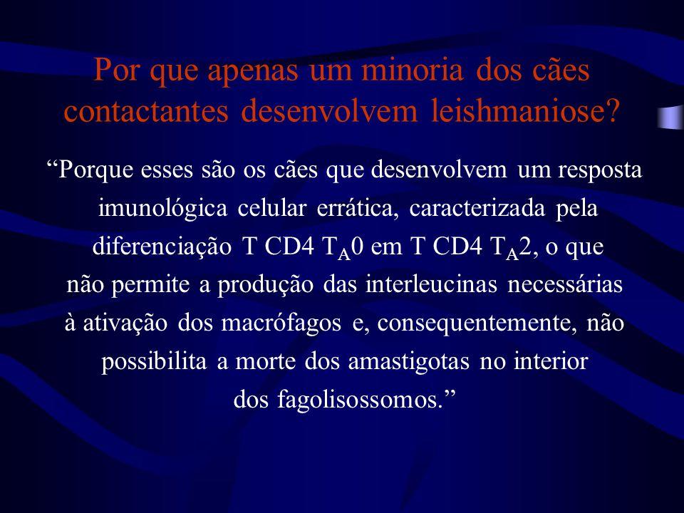 """""""Porque esses são os cães que desenvolvem um resposta imunológica celular errática, caracterizada pela diferenciação T CD4 T A 0 em T CD4 T A 2, o que"""