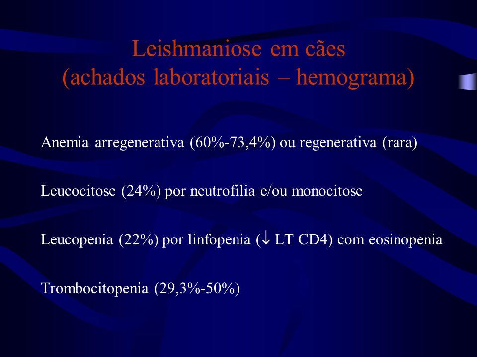 Leishmaniose em cães (achados laboratoriais – hemograma) Anemia arregenerativa (60%-73,4%) ou regenerativa (rara) Leucocitose (24%) por neutrofilia e/