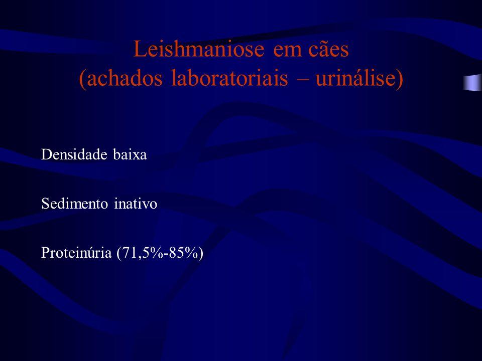 Leishmaniose em cães (achados laboratoriais – urinálise) Densidade baixa Sedimento inativo Proteinúria (71,5%-85%)