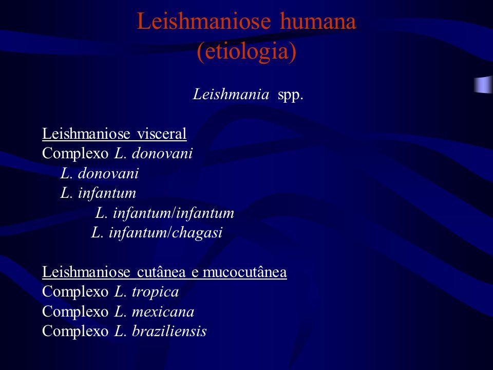 Leishmaniose humana (etiologia) Leishmania spp. Leishmaniose visceral Complexo L. donovani L. donovani L. infantum L. infantum/infantum L. infantum/ch