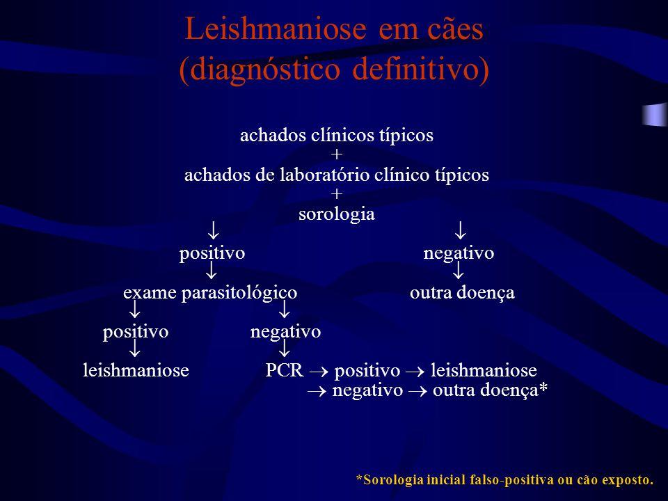 Leishmaniose em cães (diagnóstico definitivo) achados clínicos típicos + achados de laboratório clínico típicos + sorologia  positivo negativo  exam