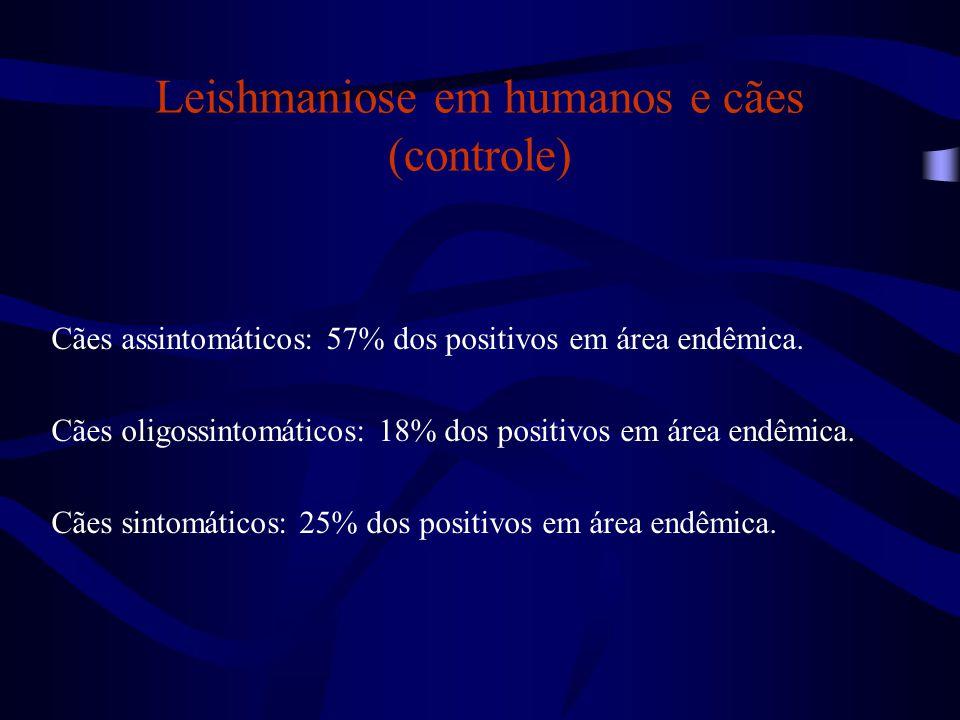 Cães assintomáticos: 57% dos positivos em área endêmica. Cães oligossintomáticos: 18% dos positivos em área endêmica. Cães sintomáticos: 25% dos posit