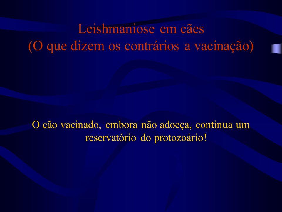 Leishmaniose em cães (O que dizem os contrários a vacinação) O cão vacinado, embora não adoeça, continua um reservatório do protozoário!