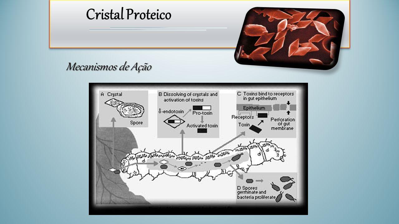 Cristal Proteico Mecanismos de Ação