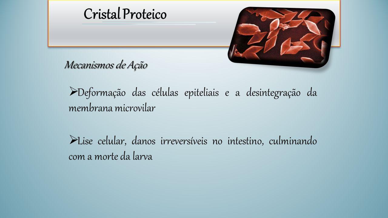 Cristal Proteico Mecanismos de Ação  Deformação das células epiteliais e a desintegração da membrana microvilar  Lise celular, danos irreversíveis n