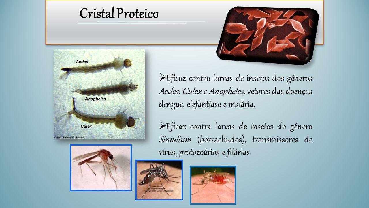 Cristal Proteico  Eficaz contra larvas de insetos dos gêneros Aedes, Culex e Anopheles, vetores das doenças dengue, elefantíase e malária.  Eficaz c