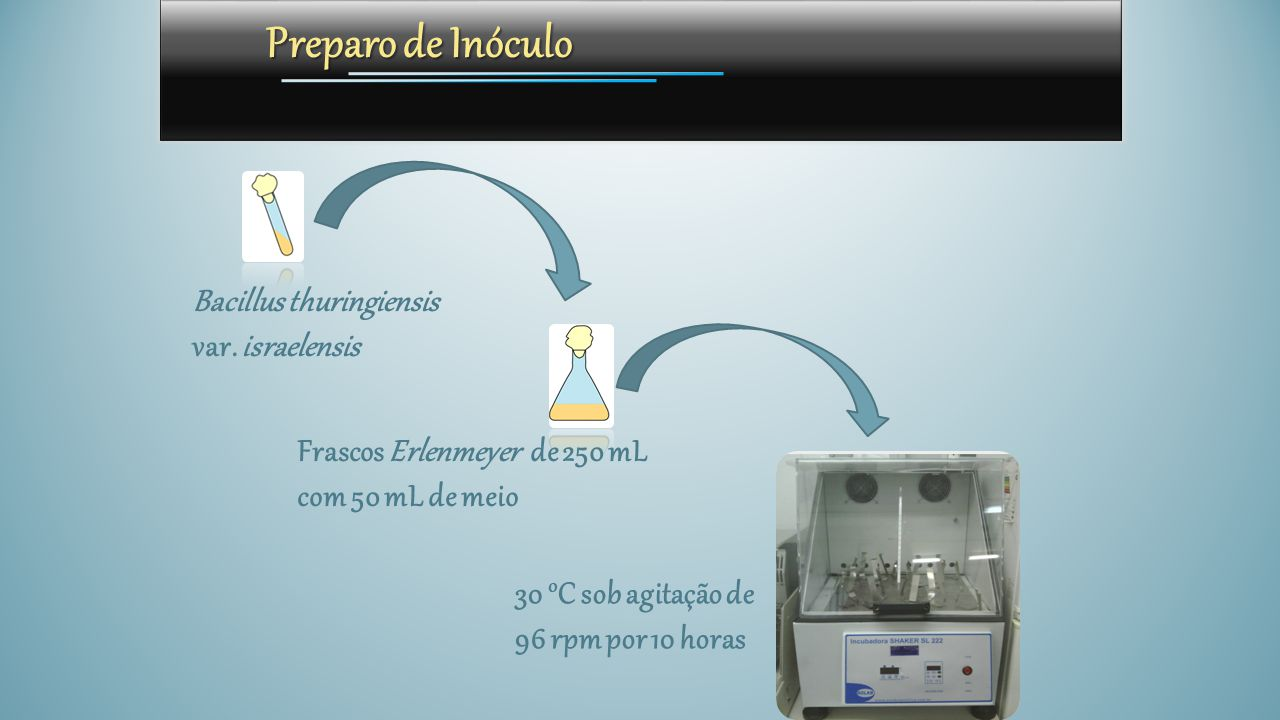 Preparo de Inóculo Bacillus thuringiensis var. israelensis Frascos Erlenmeyer de 250 mL com 50 mL de meio 30 o C sob agitação de 96 rpm por 10 horas