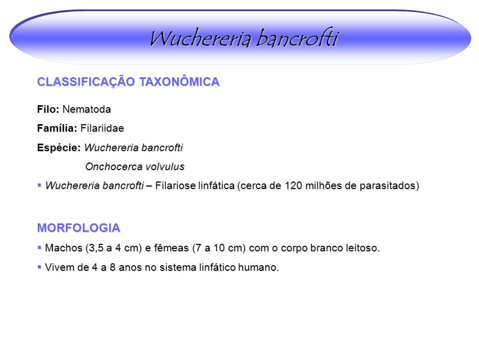 Wuchereria bancrofti CLASSIFICAÇÃO TAXONÔMICA Filo: Nematoda Família: Filariidae Espécie: Wuchereria bancrofti Onchocerca volvulus  Wuchereria bancro