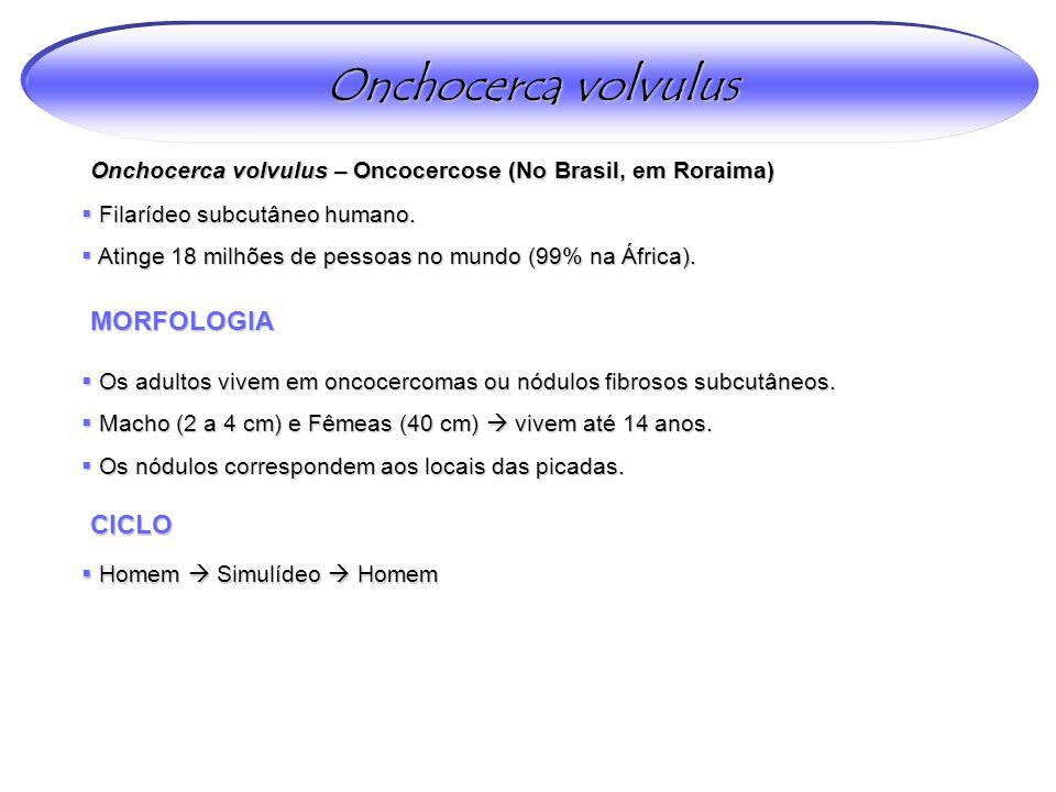 Onchocerca volvulus – Oncocercose (No Brasil, em Roraima)  Filarídeo subcutâneo humano.  Atinge 18 milhões de pessoas no mundo (99% na África). MORF