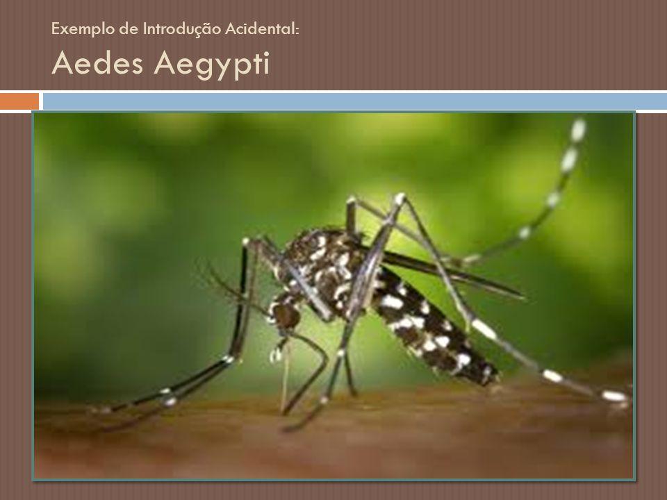Exemplo de Introdução Acidental: Aedes Aegypti Conhecido por ser o vetor da dengue, o mosquito Aedes aegypti é próprio de regiões tropicais e subtropi