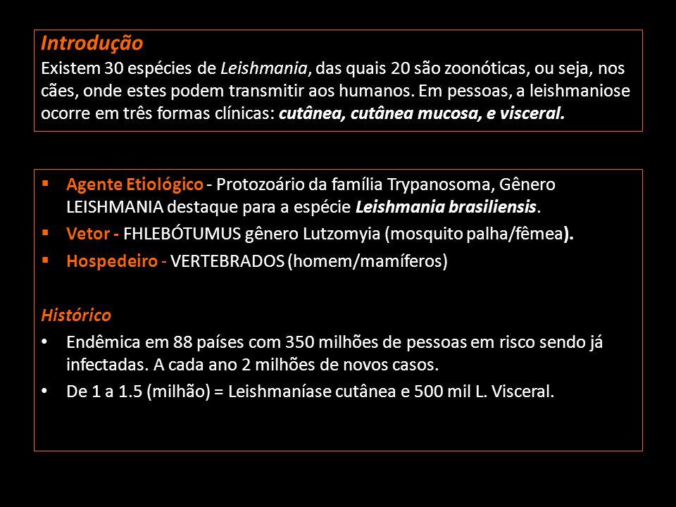 Introdução Existem 30 espécies de Leishmania, das quais 20 são zoonóticas, ou seja, nos cães, onde estes podem transmitir aos humanos. Em pessoas, a l