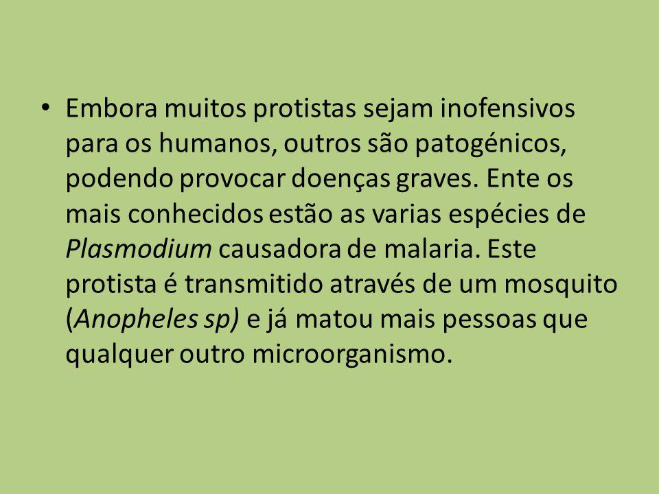 Embora muitos protistas sejam inofensivos para os humanos, outros são patogénicos, podendo provocar doenças graves. Ente os mais conhecidos estão as v
