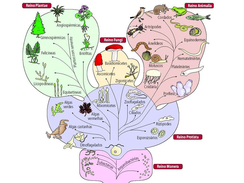 Doença do sono O tripanossoma causa inflamações no cérebro, doença do sono que é também transmitida através de um mosquito.