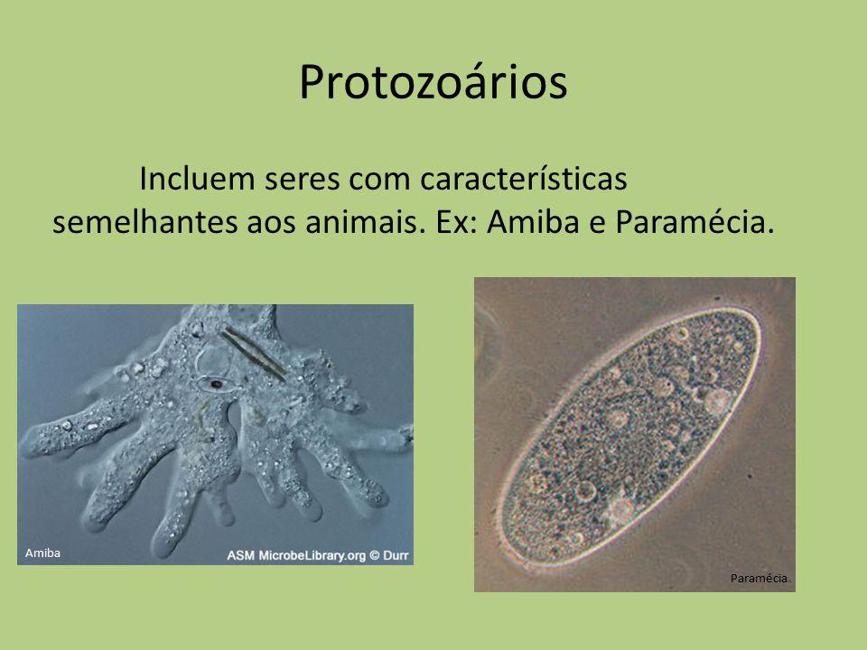 Protozoários Incluem seres com características semelhantes aos animais. Ex: Amiba e Paramécia. Amiba Paramécia