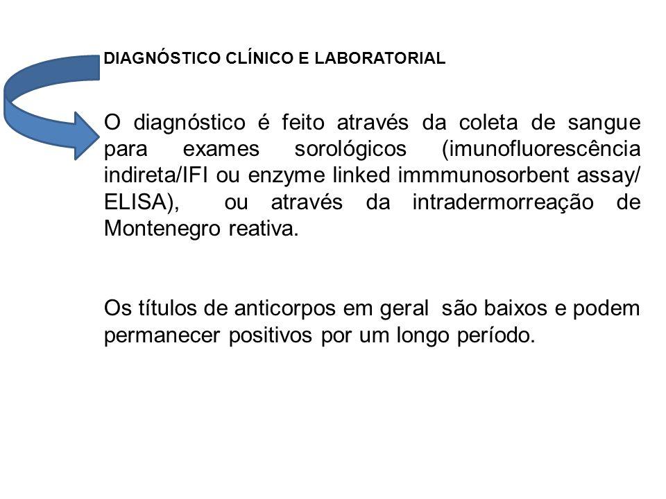 DIAGNÓSTICO CLÍNICO E LABORATORIAL O diagnóstico é feito através da coleta de sangue para exames sorológicos (imunofluorescência indireta/IFI ou enzym