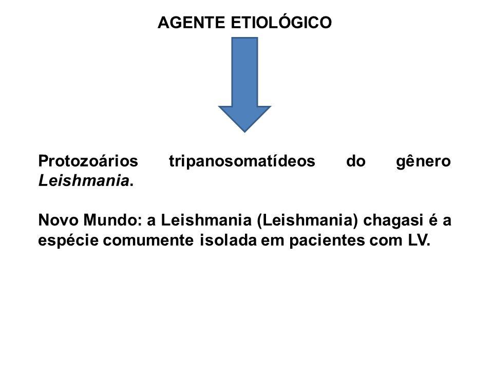 AGENTE ETIOLÓGICO Protozoários tripanosomatídeos do gênero Leishmania. Novo Mundo: a Leishmania (Leishmania) chagasi é a espécie comumente isolada em