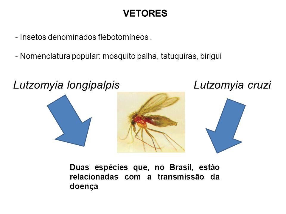 VETORES - Insetos denominados flebotomíneos. - Nomenclatura popular: mosquito palha, tatuquiras, birigui Lutzomyia longipalpis Lutzomyia cruzi Duas es