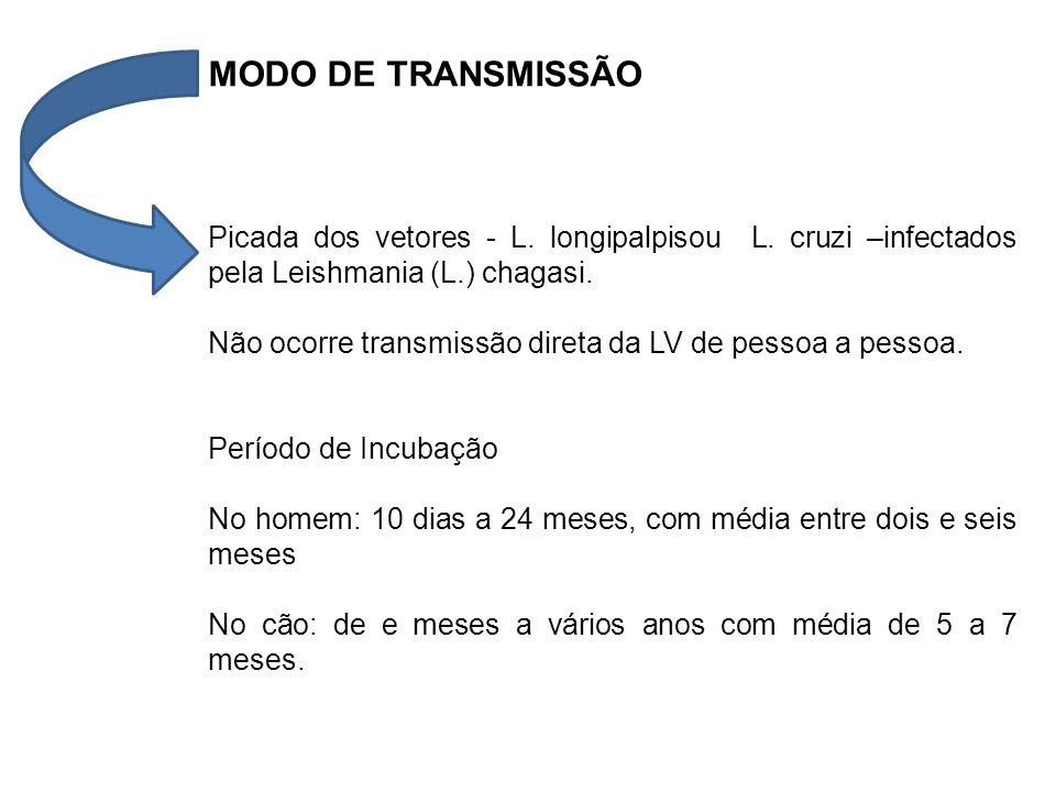 MODO DE TRANSMISSÃO Picada dos vetores - L. longipalpisou L. cruzi –infectados pela Leishmania (L.) chagasi. Não ocorre transmissão direta da LV de pe