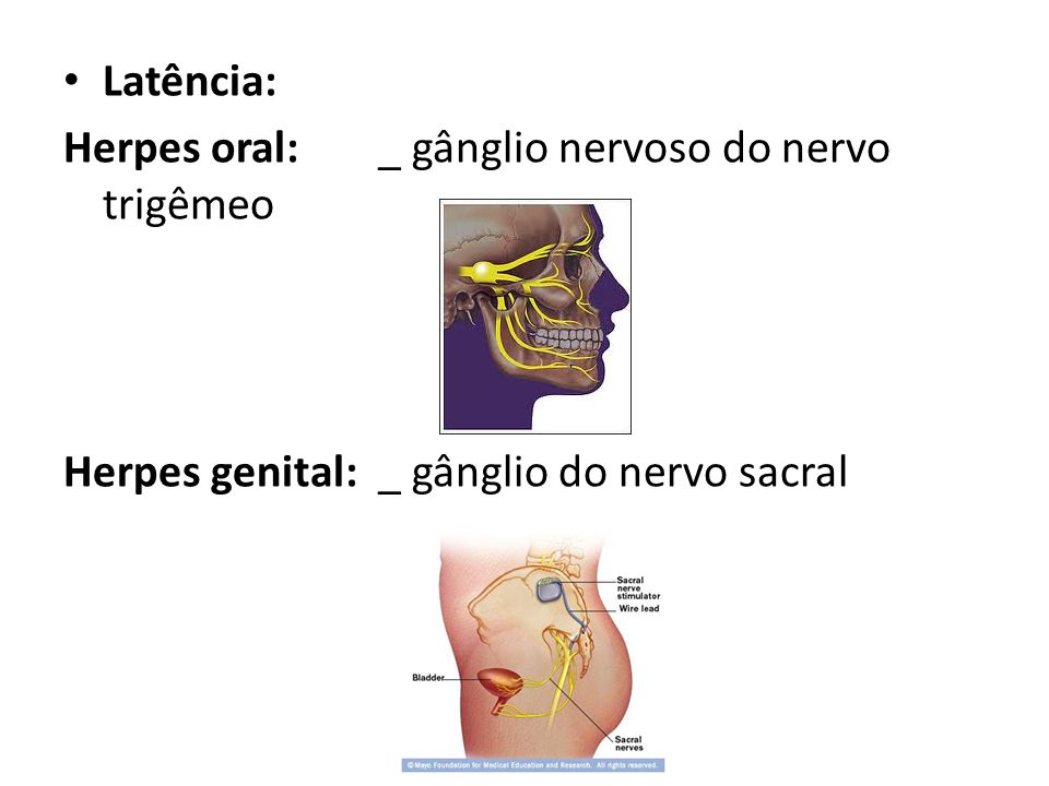 Latência: Herpes oral:_ gânglio nervoso do nervo trigêmeo Herpes genital:_ gânglio do nervo sacral