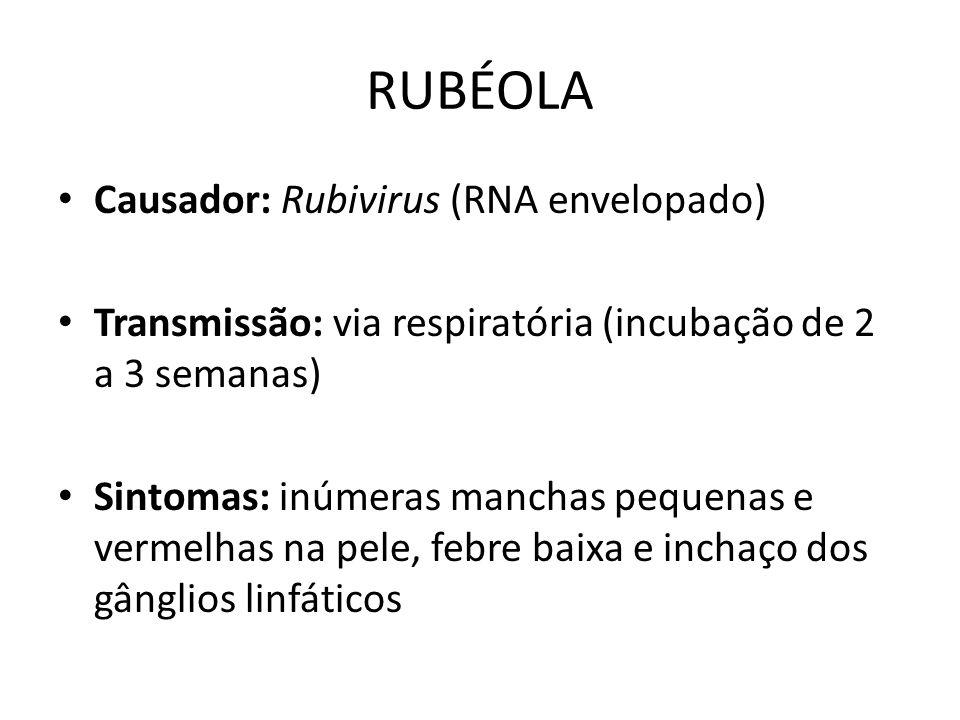 RUBÉOLA Causador: Rubivirus (RNA envelopado) Transmissão: via respiratória (incubação de 2 a 3 semanas) Sintomas: inúmeras manchas pequenas e vermelha