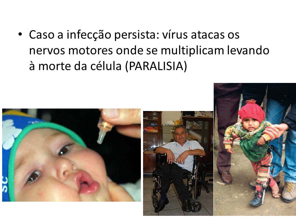 Caso a infecção persista: vírus atacas os nervos motores onde se multiplicam levando à morte da célula (PARALISIA)