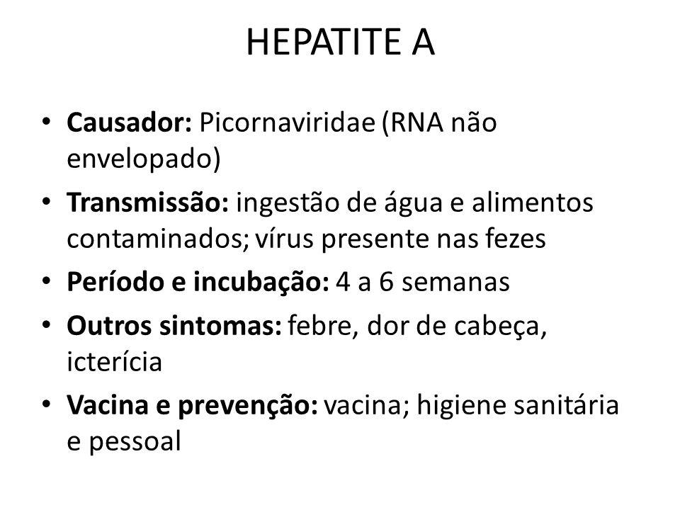 HEPATITE A Causador: Picornaviridae (RNA não envelopado) Transmissão: ingestão de água e alimentos contaminados; vírus presente nas fezes Período e in