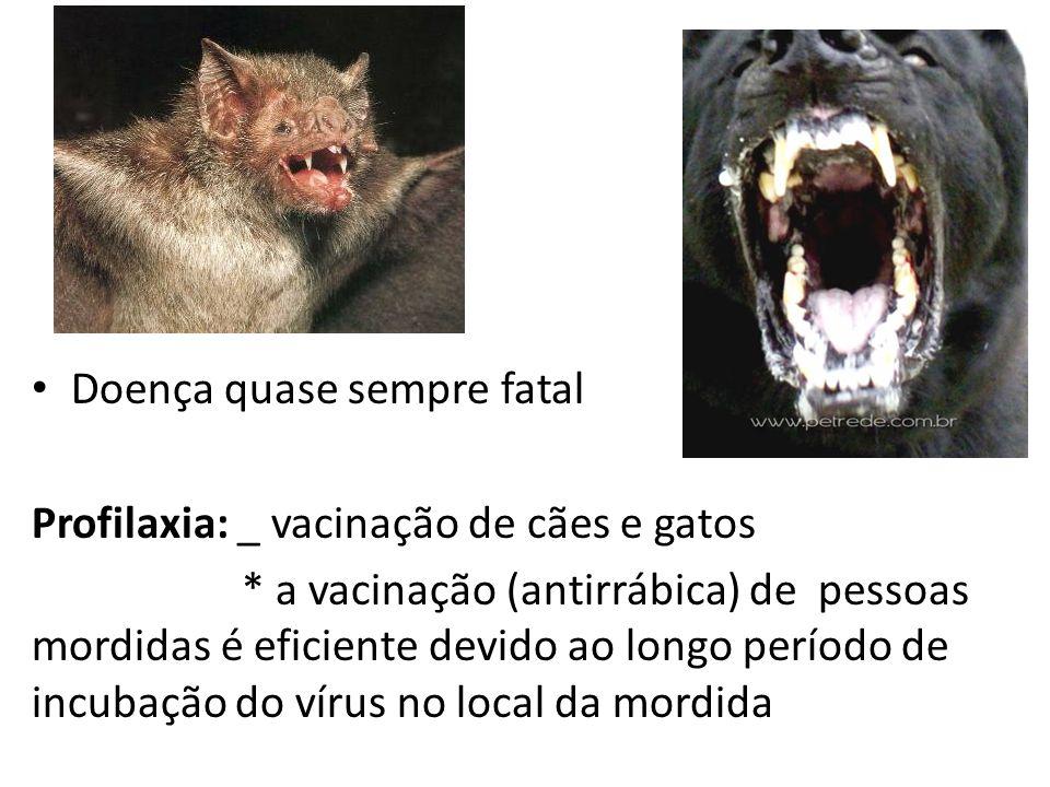 Doença quase sempre fatal Profilaxia: _ vacinação de cães e gatos * a vacinação (antirrábica) de pessoas mordidas é eficiente devido ao longo período