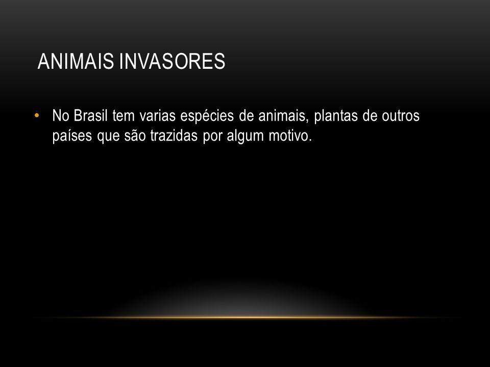 No Brasil tem varias espécies de animais, plantas de outros países que são trazidas por algum motivo.