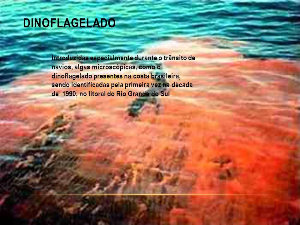 DINOFLAGELADO Introduzidas especialmente durante o trânsito de navios, algas microscópicas, como o dinoflagelado presentes na costa brasileira, sendo identificadas pela primeira vez na década de 1990, no litoral do Rio Grande do Sul.