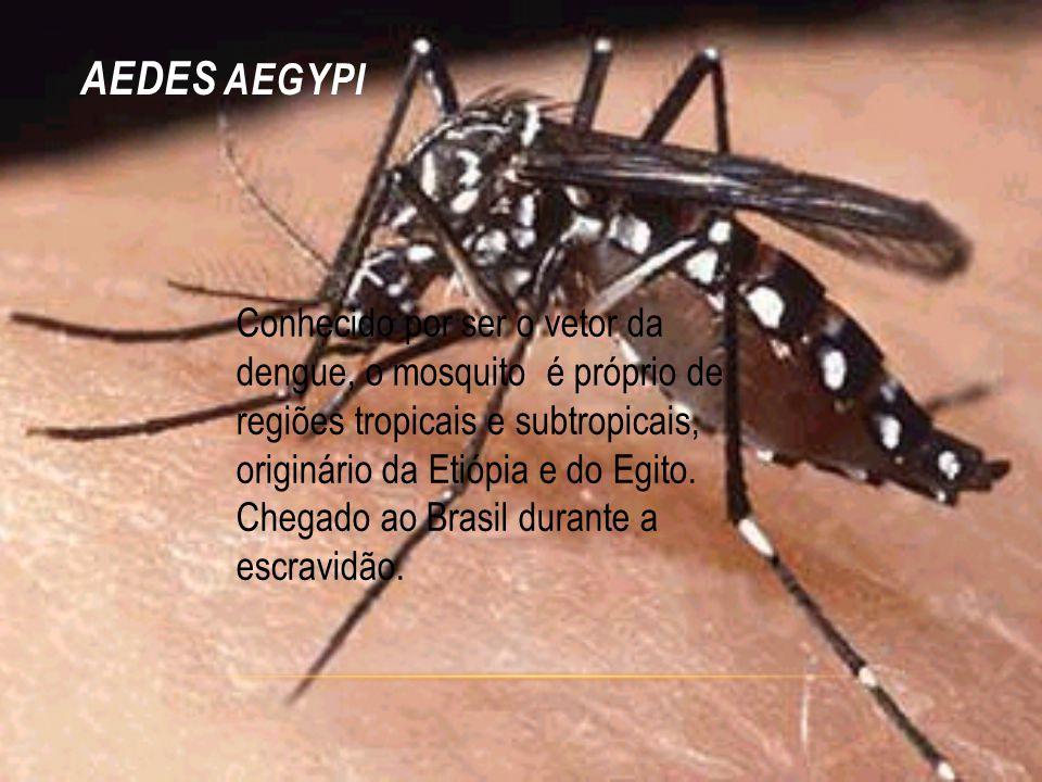 AEDES AEGYPI Conhecido por ser o vetor da dengue, o mosquito é próprio de regiões tropicais e subtropicais, originário da Etiópia e do Egito. Chegado