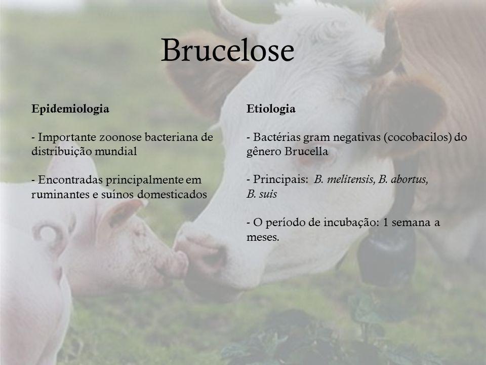 Brucelose Epidemiologia - Importante zoonose bacteriana de distribuição mundial - Encontradas principalmente em ruminantes e suínos domesticados Etiol