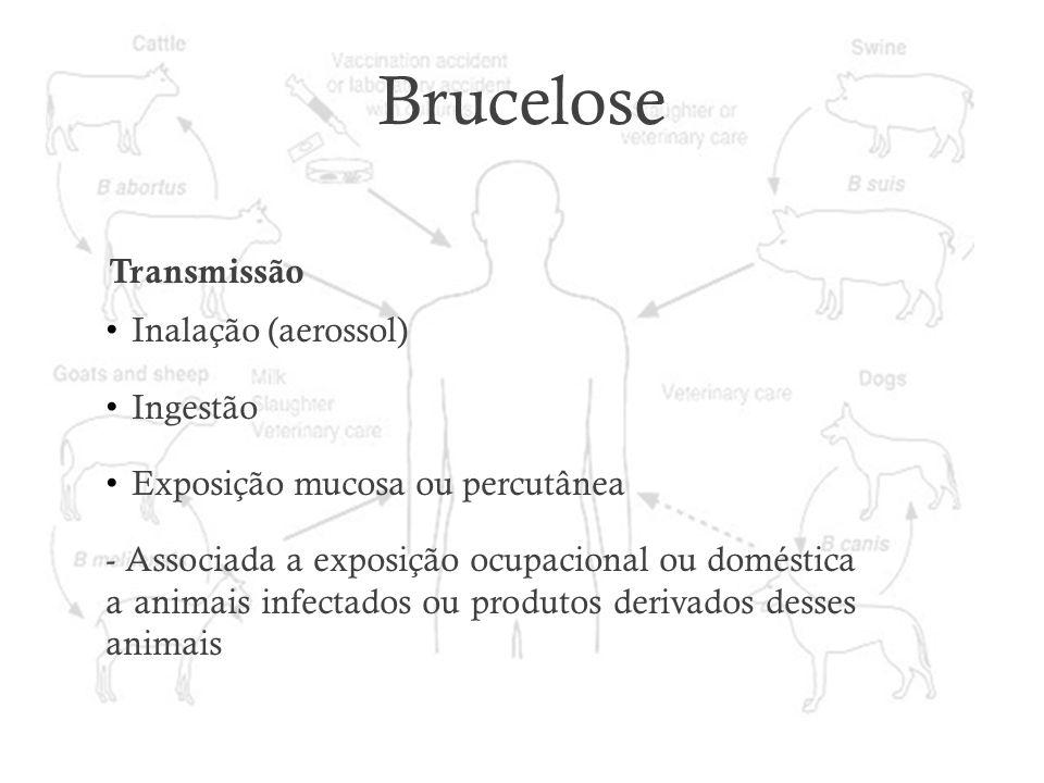 Brucelose Transmissão Inalação (aerossol) Ingestão Exposição mucosa ou percutânea - Associada a exposição ocupacional ou doméstica a animais infectado