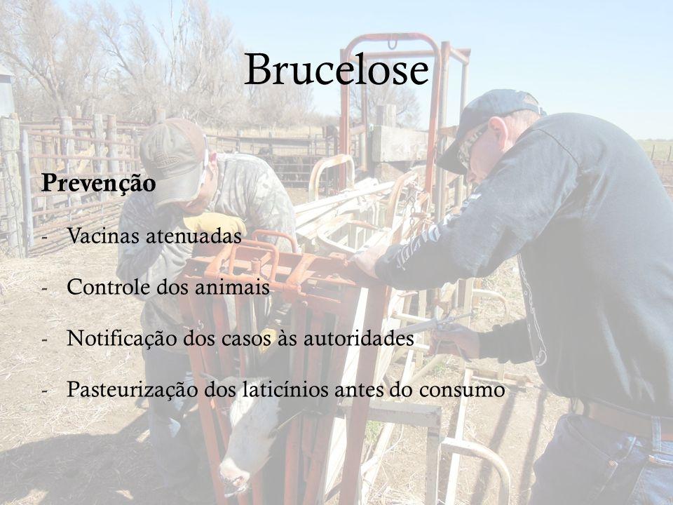 Brucelose Prevenção -Vacinas atenuadas -Controle dos animais -Notificação dos casos às autoridades -Pasteurização dos laticínios antes do consumo