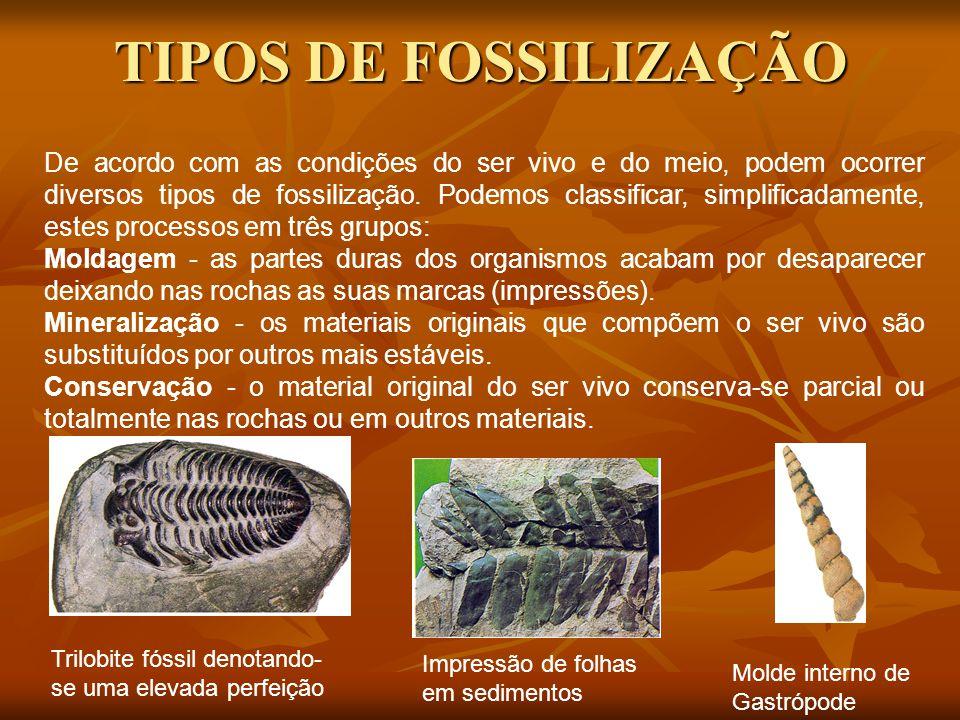 TIPOS DE FOSSILIZAÇÃO De acordo com as condições do ser vivo e do meio, podem ocorrer diversos tipos de fossilização.