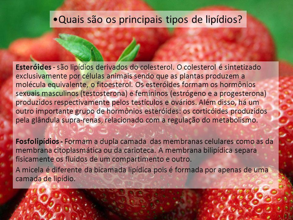 Esteróides - são lipídios derivados do colesterol.