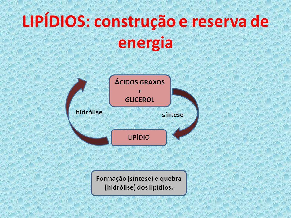 LIPÍDIOS: construção e reserva de energia ÁCIDOS GRAXOS + GLICEROL LIPÍDIO hidrólise síntese Formação (síntese) e quebra (hidrólise) dos lipídios.