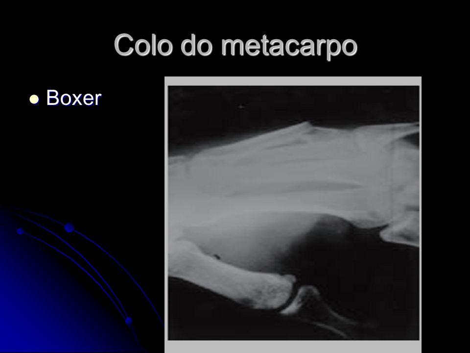 Colo do metacarpo Boxer Boxer