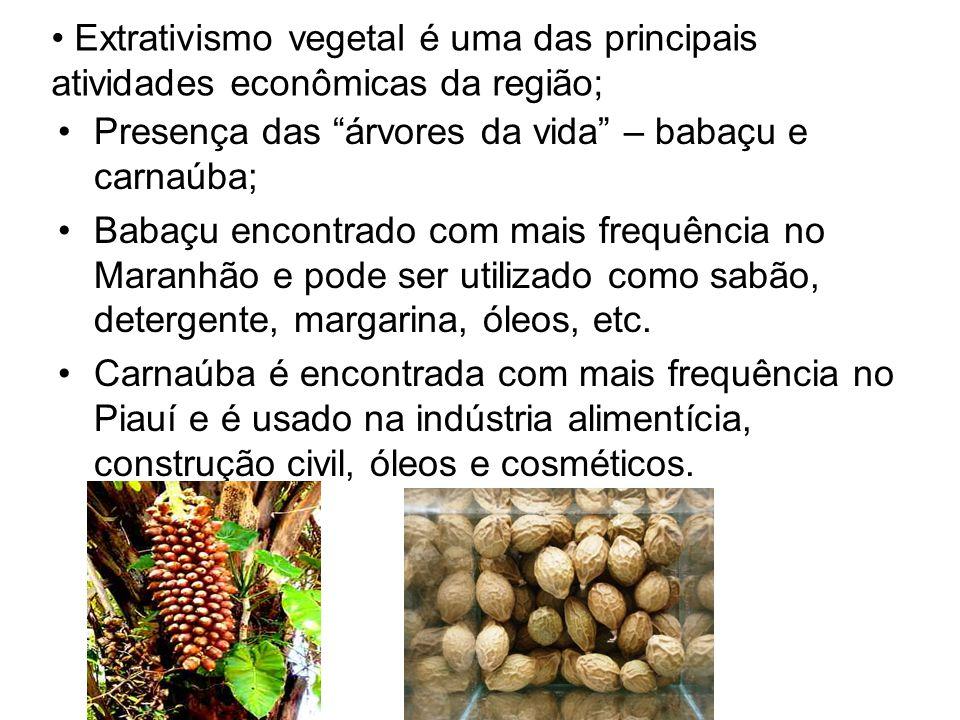 Extrativismo vegetal é uma das principais atividades econômicas da região; Presença das árvores da vida – babaçu e carnaúba; Babaçu encontrado com mais frequência no Maranhão e pode ser utilizado como sabão, detergente, margarina, óleos, etc.