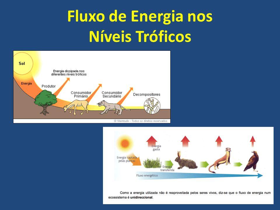 Fluxo de Energia nos Níveis Tróficos