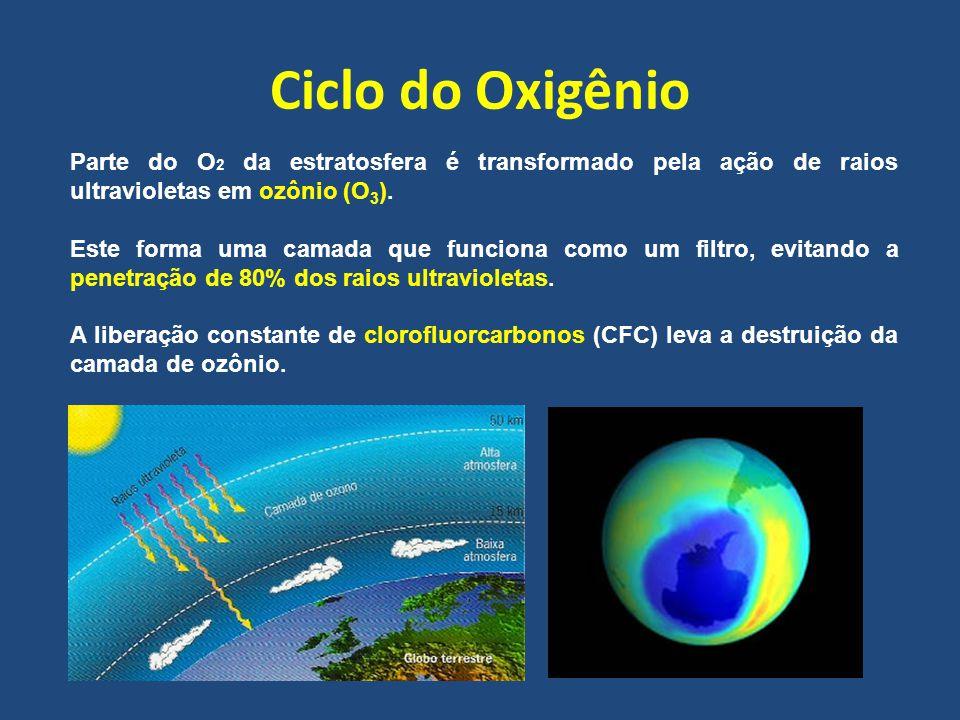 Ciclo do Oxigênio Parte do O 2 da estratosfera é transformado pela ação de raios ultravioletas em ozônio (O 3 ). Este forma uma camada que funciona co