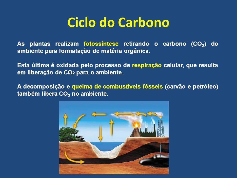 Ciclo do Carbono As plantas realizam fotossíntese retirando o carbono (CO 2 ) do ambiente para formatação de matéria orgânica. Esta última é oxidada p